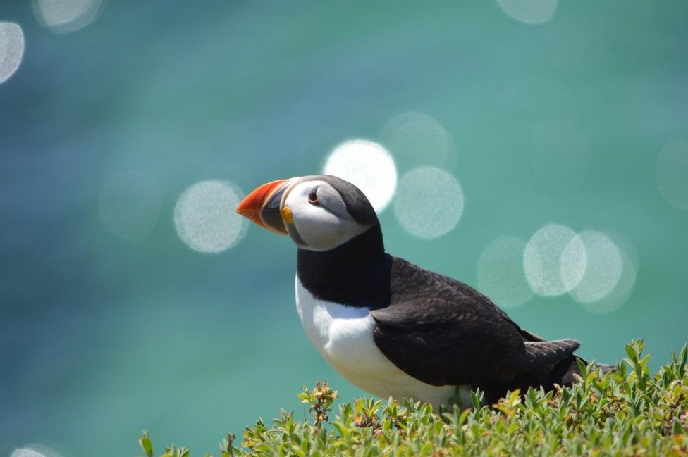A puffin on the shore