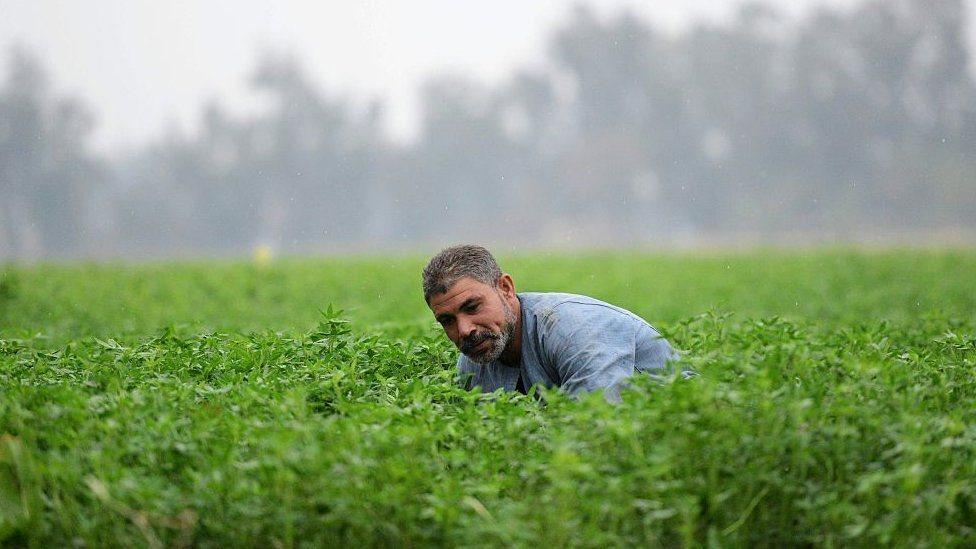 فلاح مصري يعمل في أرض زراعية