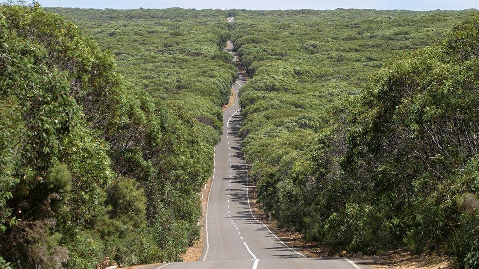 krivudavi put prolazi kroz ostrvski nacionalni park Fajnders Čejs