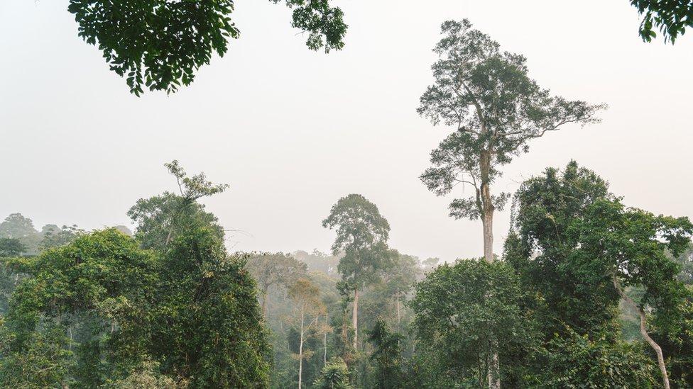 Bosque en África