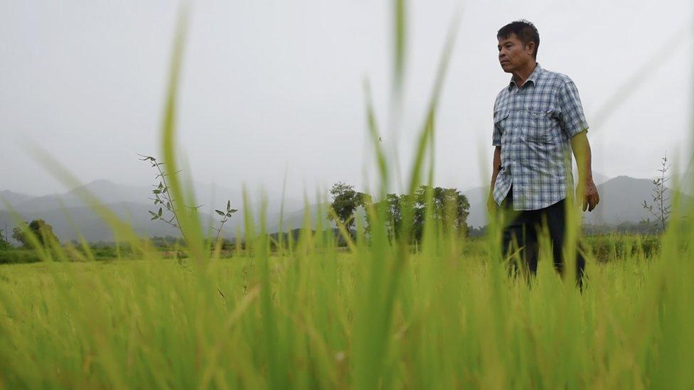 江科萊2019年在自己的稻田裏