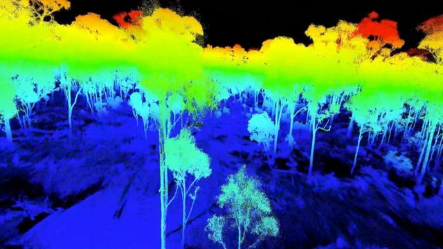 Laser-scanned tropical forest (c) Kim Calders/NPL/UCL