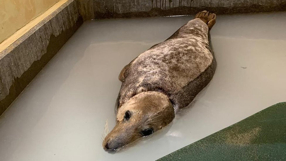 'Sir David Attenborough' Norfolk seal receives donations