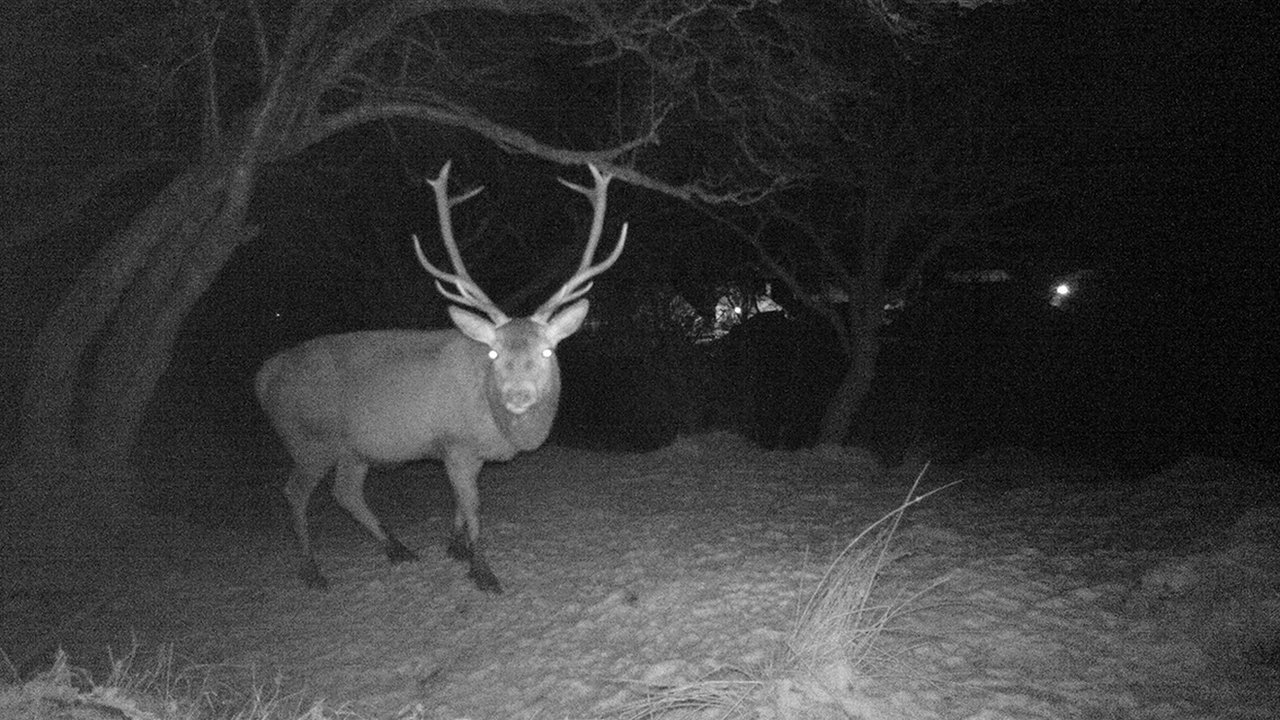 Wildlife in school grounds photographed using trail camera