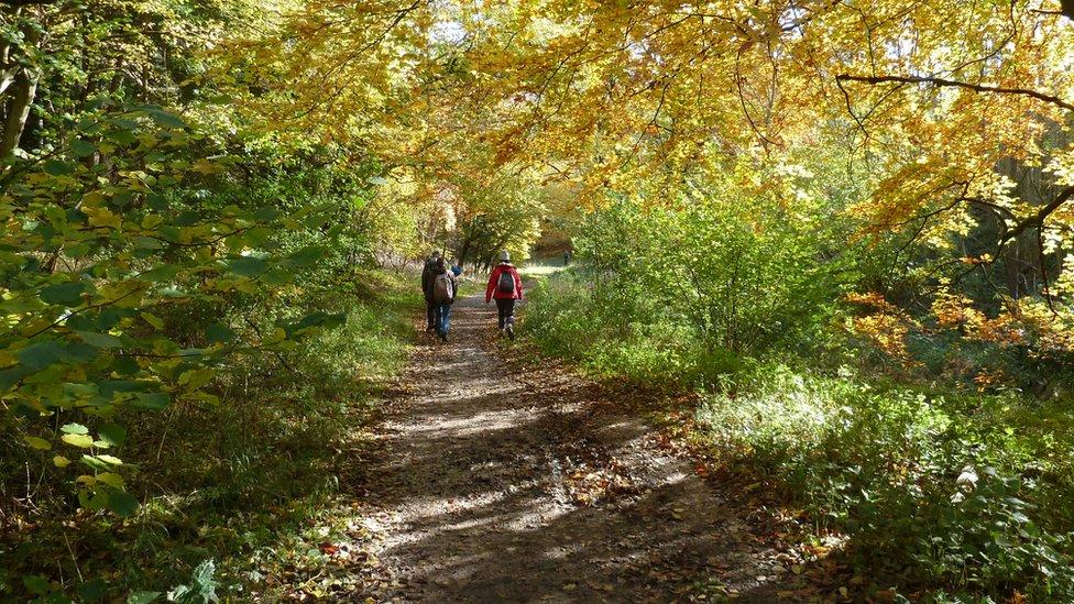 deca u šumi