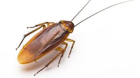 Chinese couple had 200 roaches in airport hand luggage
