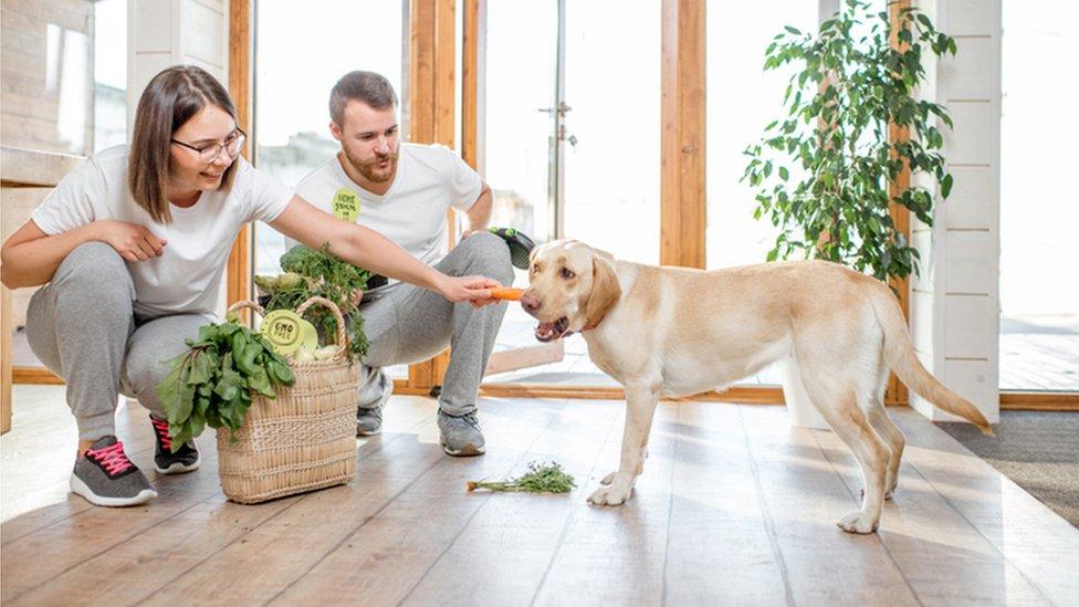 Un perro sosteniendo una zanahoria que le ha dado su dueña.