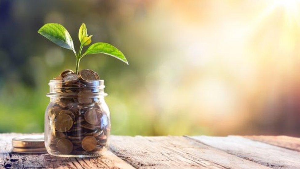 Planta em pote de moedas