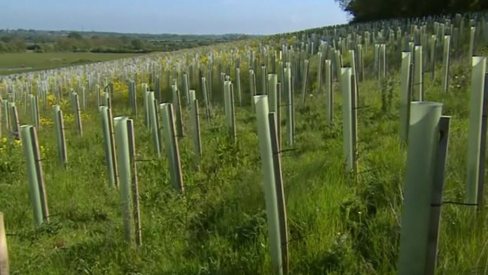 Thousands of HS2 newly planted trees died in drought