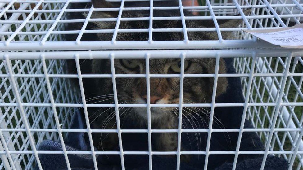 Cat in basket after rescue