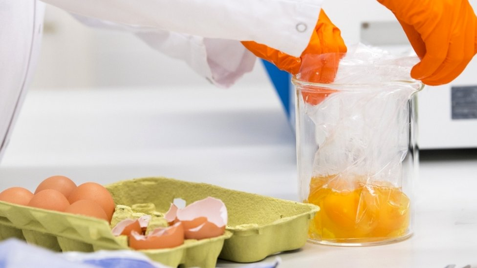 Photo of Dutch food and safety board labratory worker testing eggs for contamination