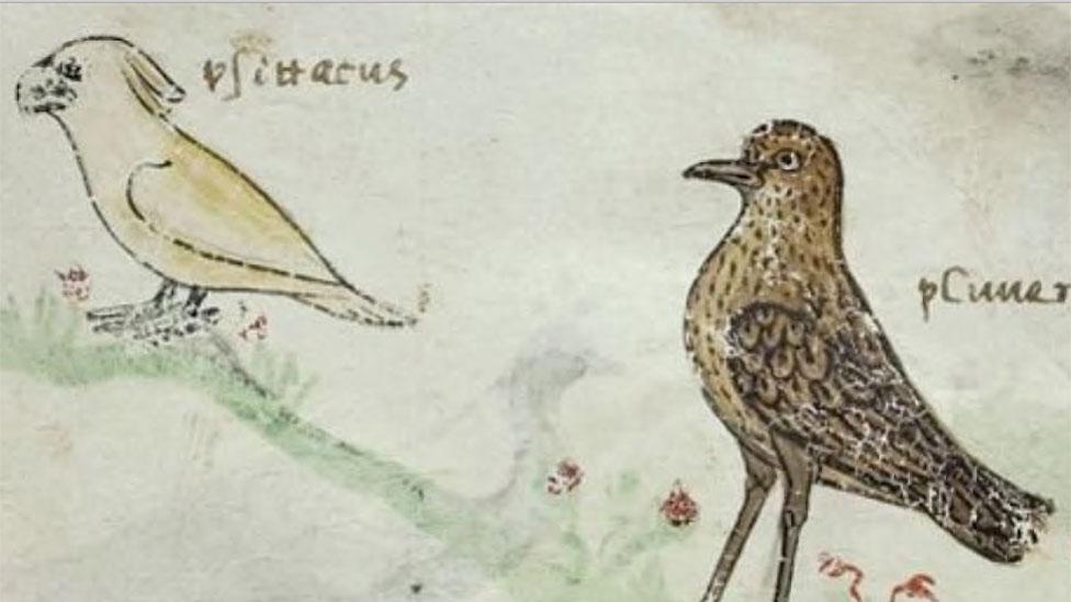 Uno de los dibujos de la cacatúa