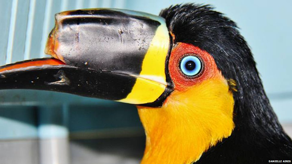 Tieta with part of her beak missing