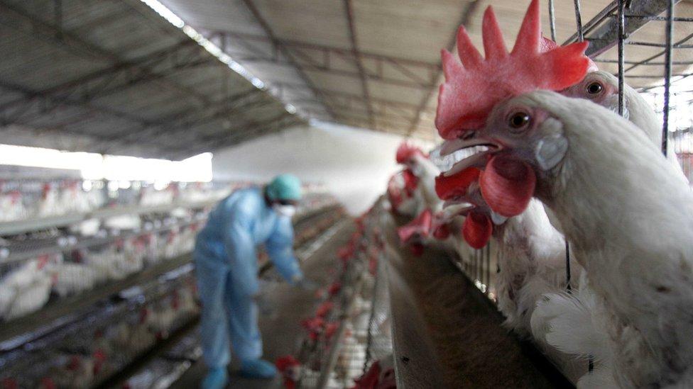 Un gallinero y un inspector con equipo de protección personal