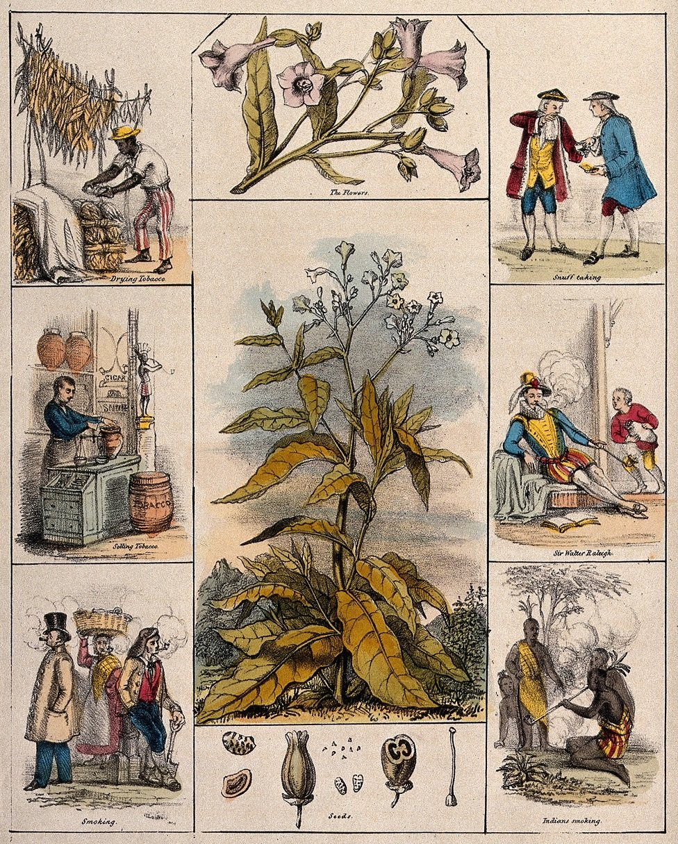 An illustration of the tobacco plant circa 1840 surrounded by flowers, seeds, drying tobacco, selling tobacco, smoking, snuff taking, Sir Walter Raleigh, Indians smoking