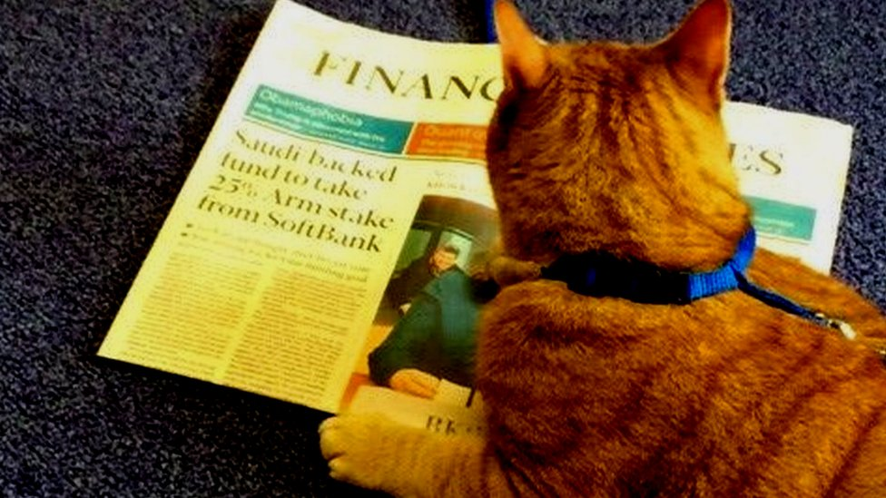 Cat reading the FT