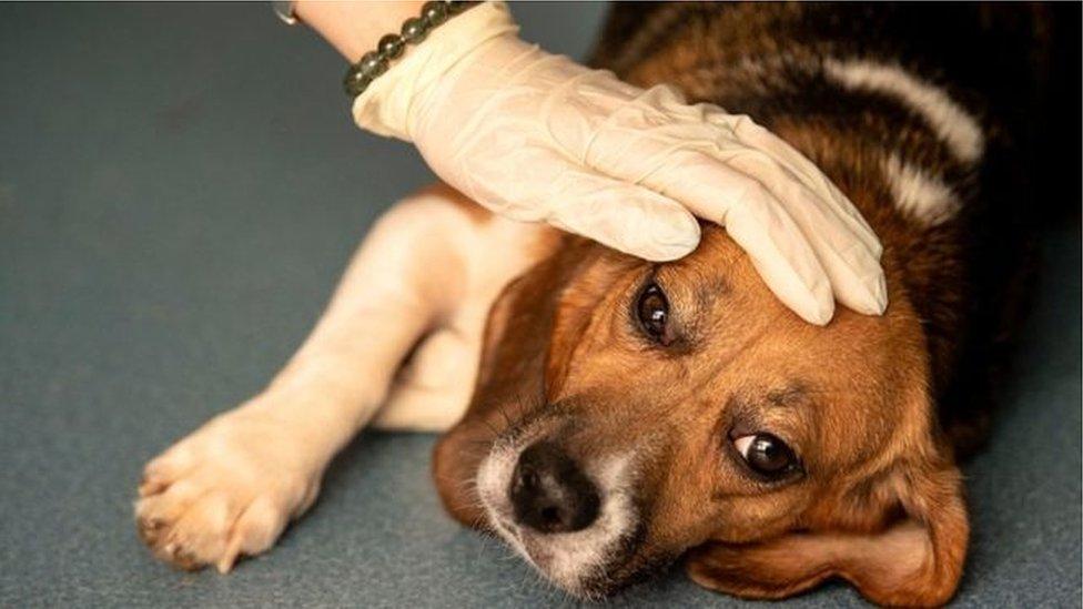Norveç'te 25 köpek öldü