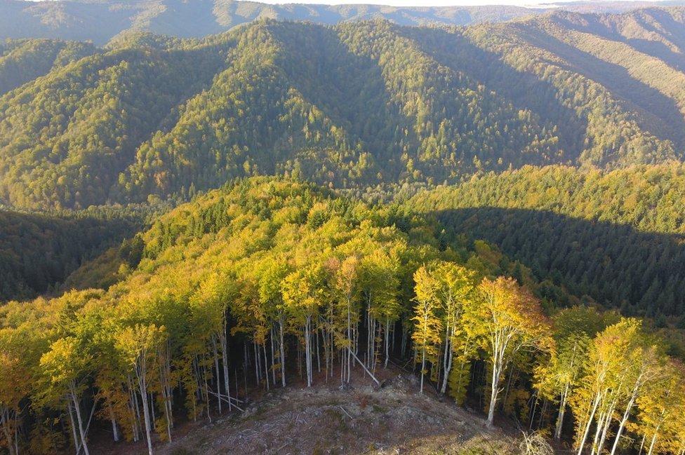 East Carpathian forests