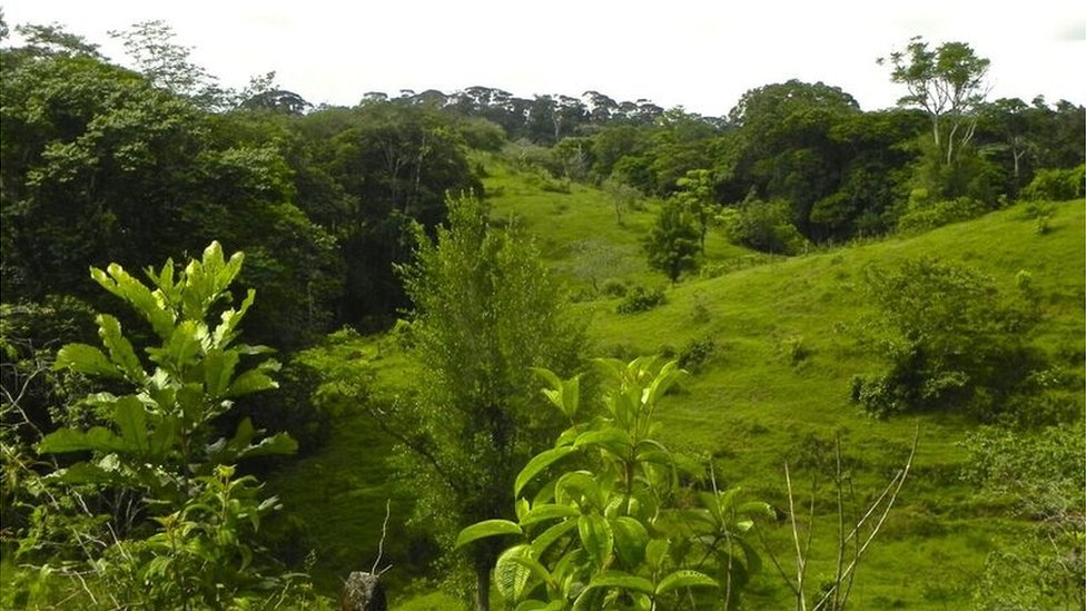 Forest regeneration, Costa Rica (Image: Robin L Chazdon)