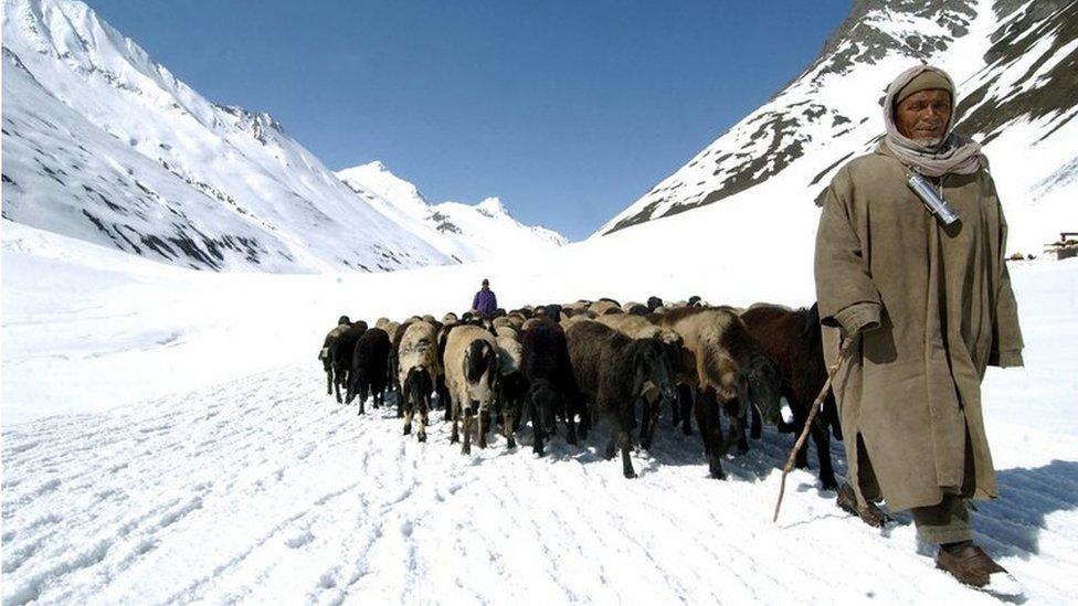 Hombres arrean ganado en Kargil