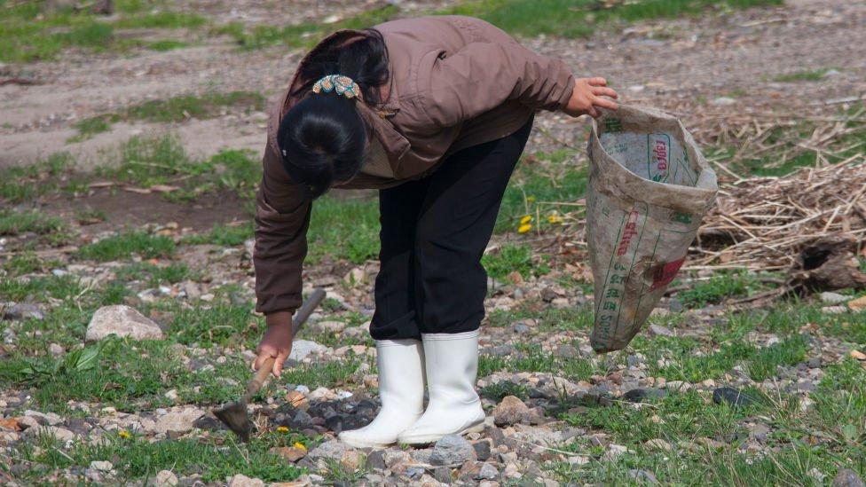 Una mujer recoge hierba para comer en la provincia de Hamgyong del Norte en 2010.