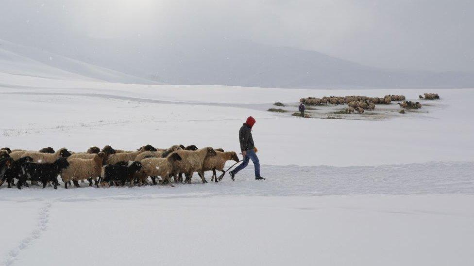 Çobanlık, Türkiye'deki Afganların yoğun olarak yaptıkları işlerden biri.