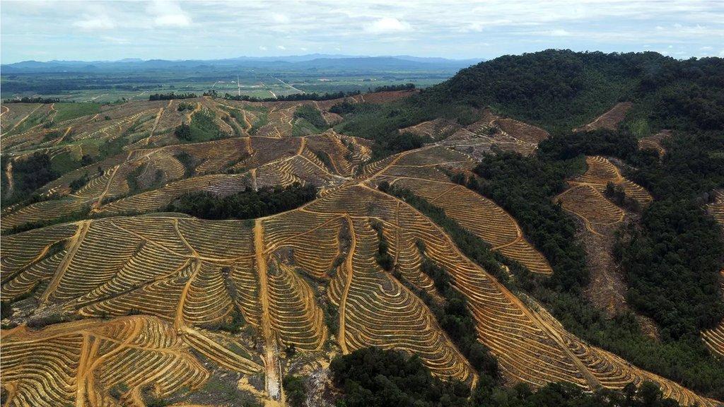 亞洲大量森林遭破壞,原因常是為生產棕櫚油之類產品而開發土地建種植場。