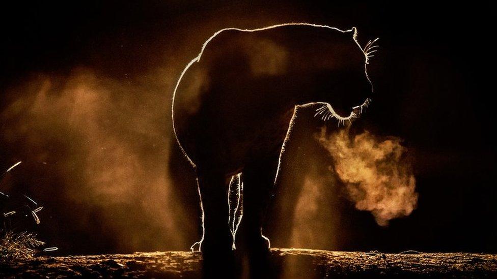 Životinje i svitanje: Neverovatne fotografije iz Afrike