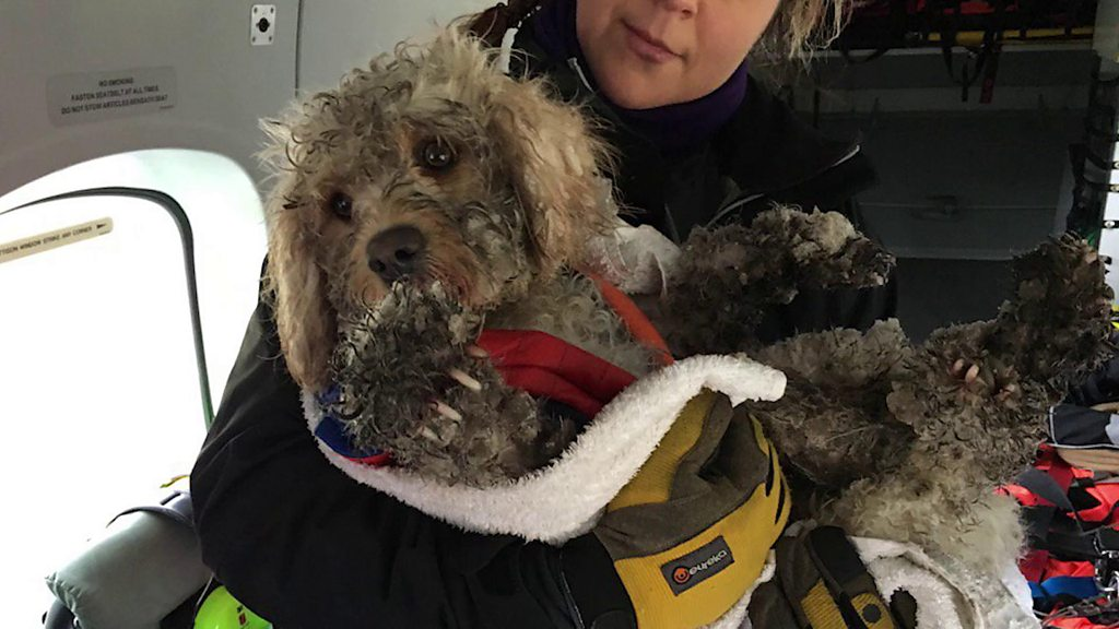 Helicopter rescue for stranded dog