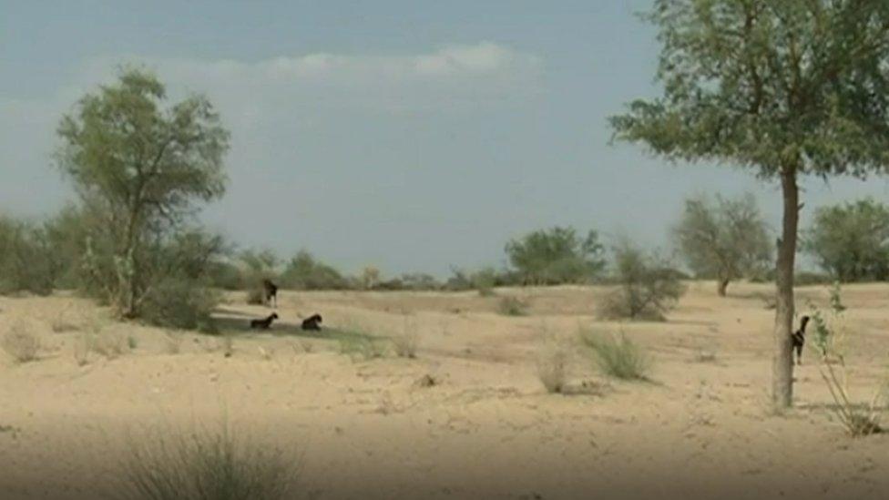File photo of Thar desert