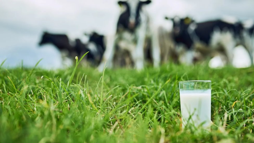 Mleko ponekad može više da hidrira od vode zato što njegovi mikronutrijenti pomažu da telo apsorbuje više vode