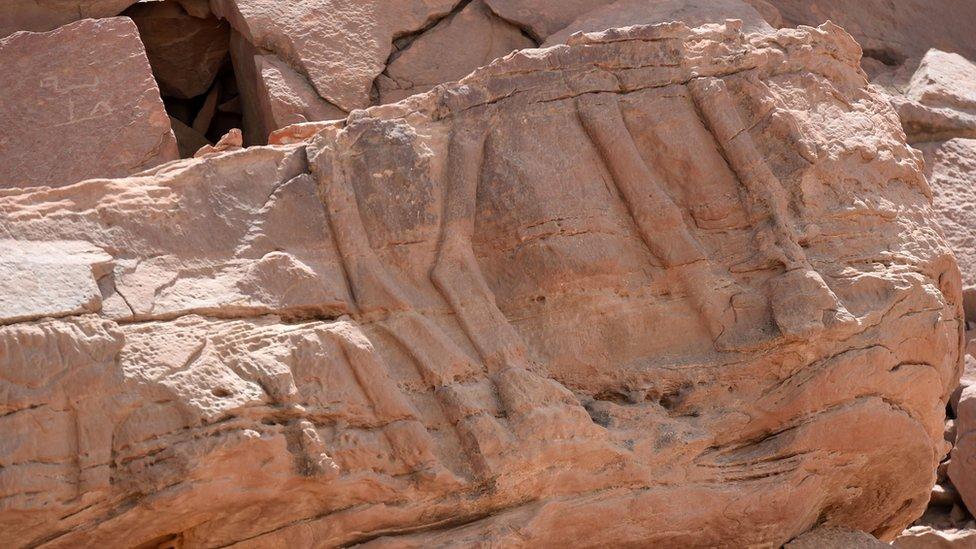 Noge kamile uklesane u steni