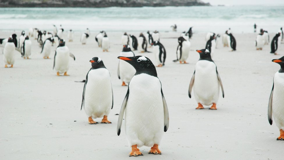 Pebbles and penguins: The Falklands island up for sale