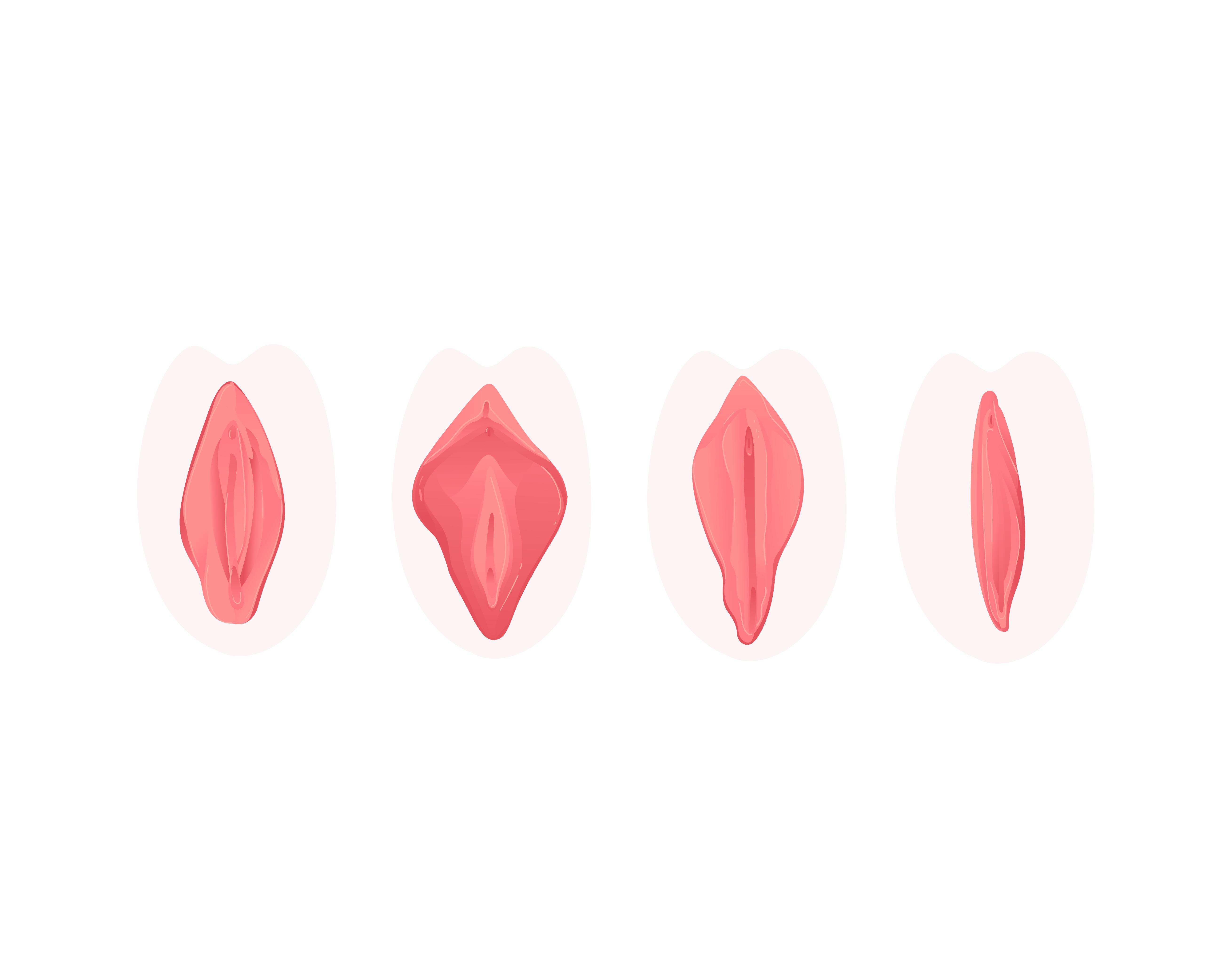 Ilustración de vaginas