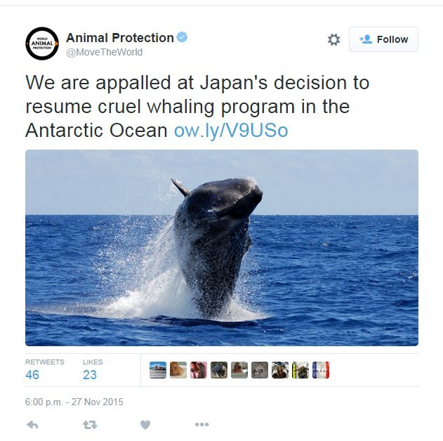 "Tweet from Animal Protection: ""We are appalled at Japan's decision to resume cruel whaling program in the Antarctic Ocean"""