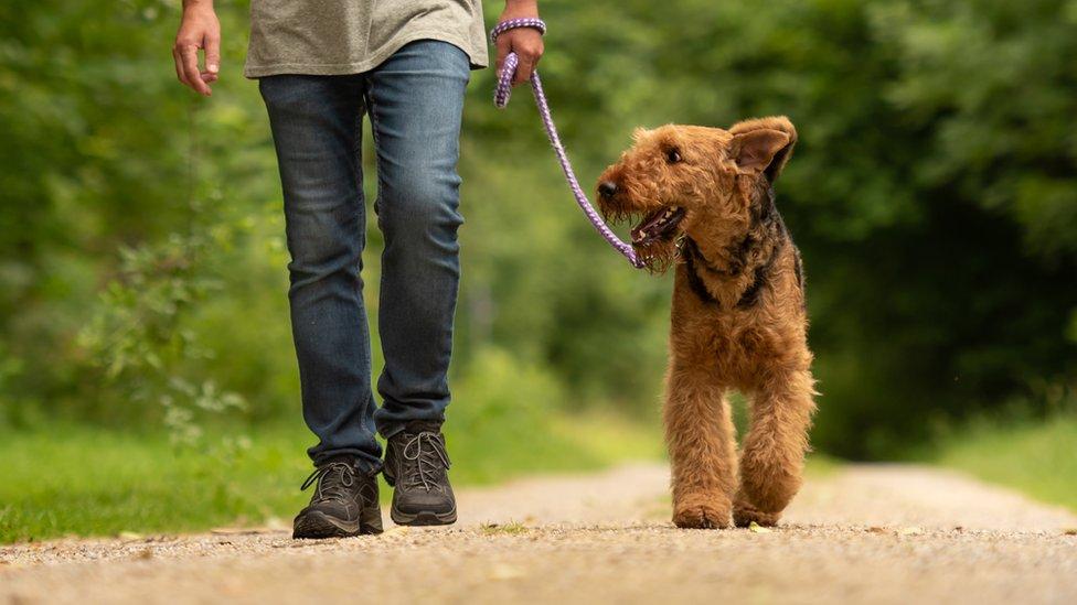 dog on lead