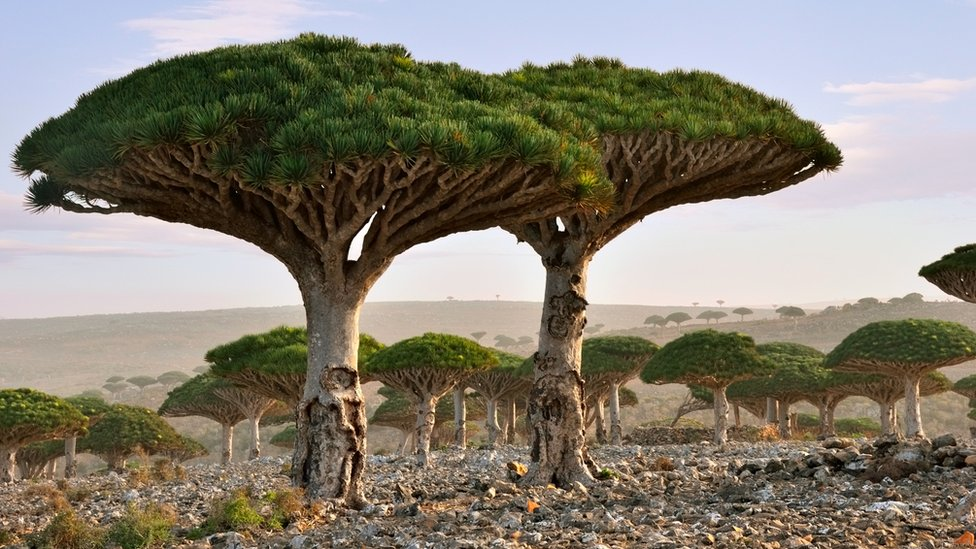 Socotra, the Galapagos of the Indian Ocean, becomes a disaster zone