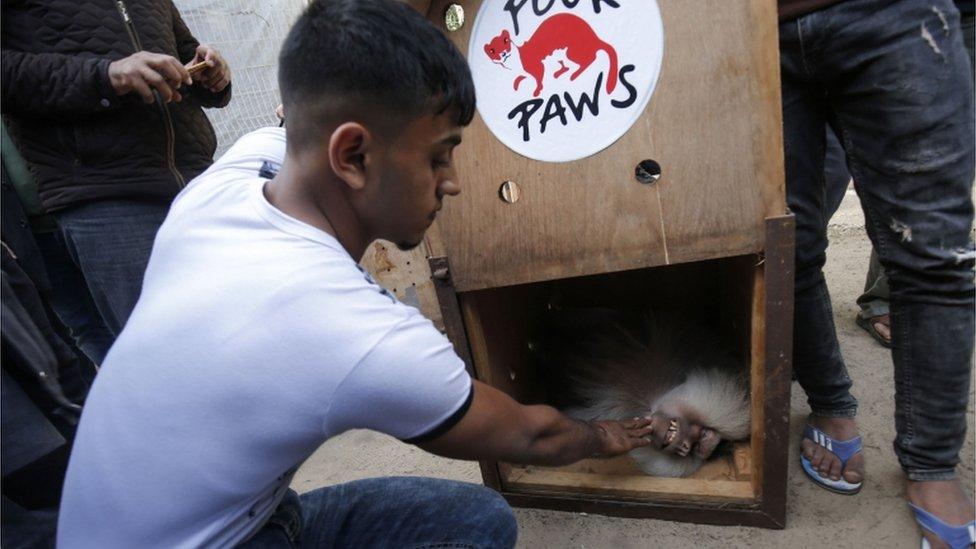 Životinje su prebačene iz Zoo vrta u Gazi