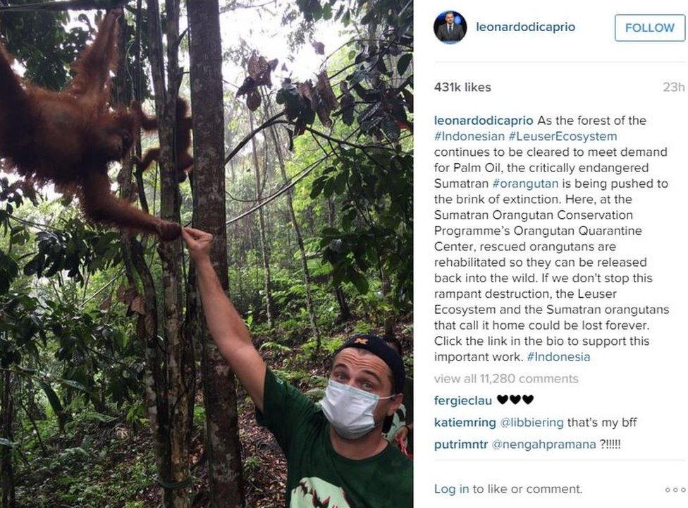 A Leonardo DiCaprio post on Instagram