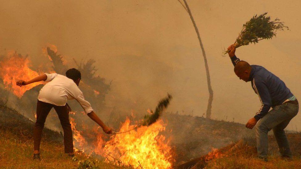 جنگل کی آگ
