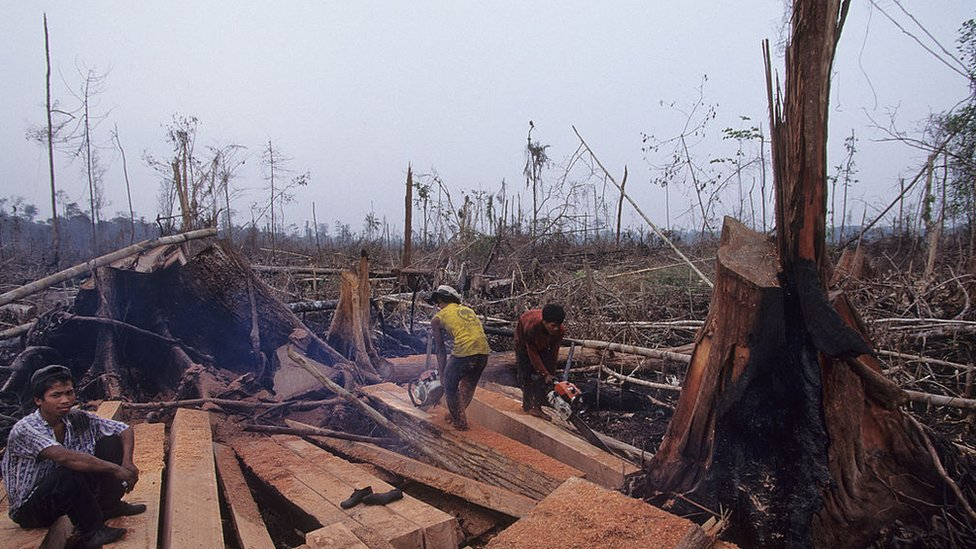 Tala en Sumatra, 2006