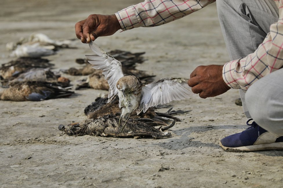 A man picks up a dead bird near the lake