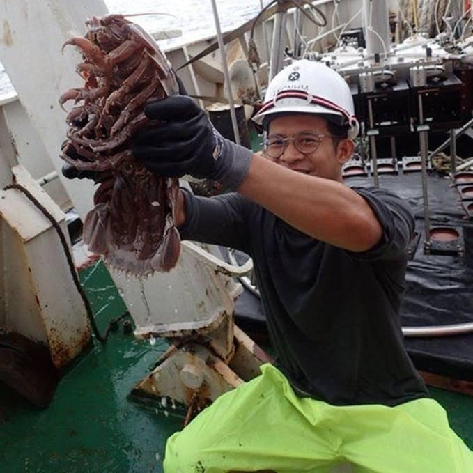 صرصور البحر العملاق