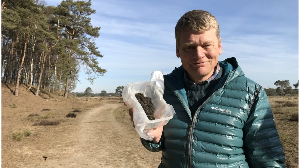 Wolf excrement found in the Netherlands