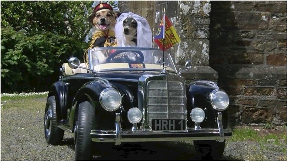 Royal wedding 2018: Dogs play Harry and Meghan