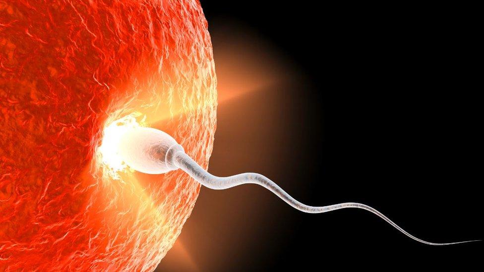 Un espermatozoide