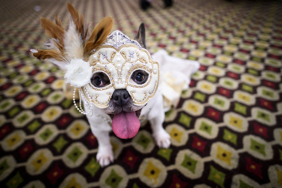 A dog is dressed in a masked carnival costume