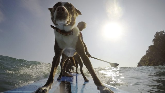 A dog on a surfboard with his owner