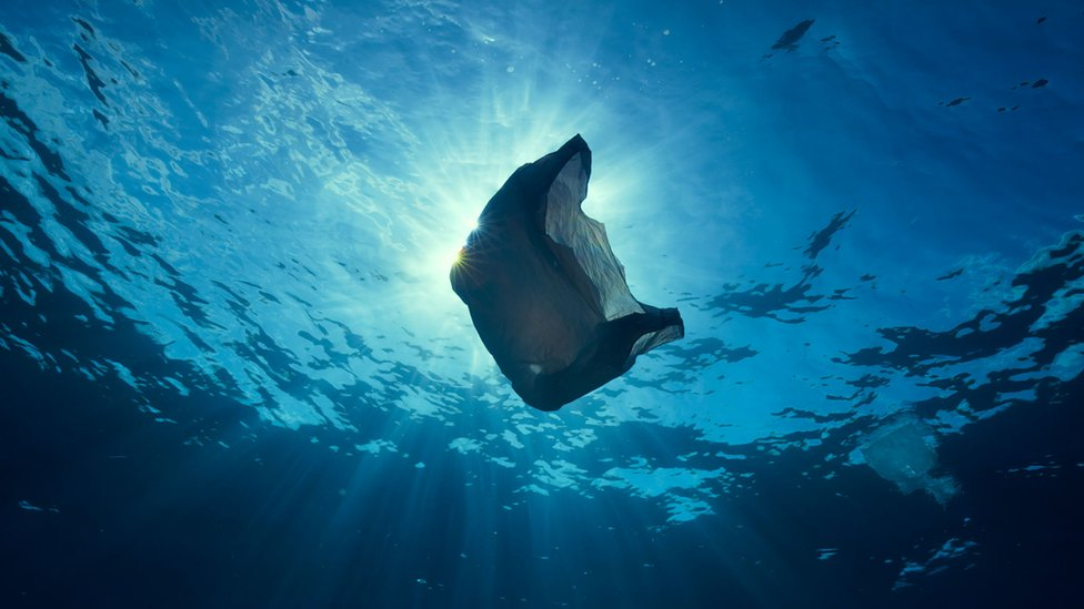 A plastic bag in the water