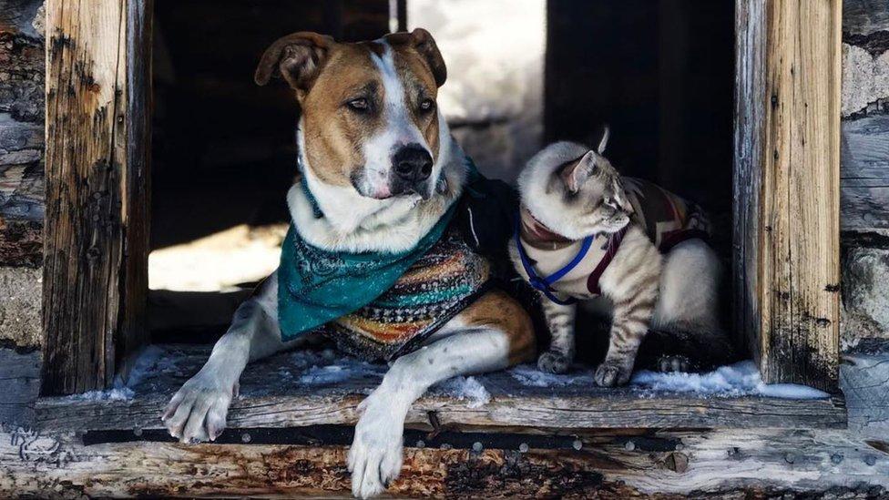 Perro y gato sentados en la puerta de una casa abandonada.